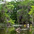 Swamp Stroll by Matthew Felder