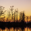 Swamp Sunset Afterlight by Stefan Mazzola