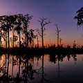 Swamp Sunset by Stefan Mazzola