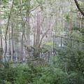 Photo Of Swamp by Susan Nielsen