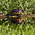 Swamp Turtle Sunning On A Log by Michael Whitaker