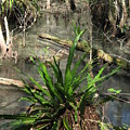 Swamp Vegetation by Christiane Schulze Art And Photography