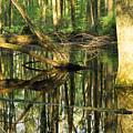 Swamps Are Beautiful Too by Amanda Kiplinger
