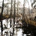 Swamps Of Louisiana 5 by Sally Mellish