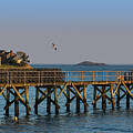 Swampscott Pier Swampscott Ma by Toby McGuire