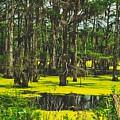 Swampy Beauty by Mountain Dreams