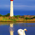 Swan At The Lighthouse by Nick Zelinsky