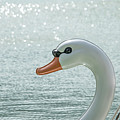 Swan Boat In The Lake by Que Siam