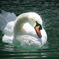 Swan Bow by Nadja Meyer