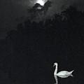 Swan by Brad Mullins