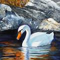 Swan By Rocks by Lyn Tietz