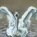 Swan Dance by Cori Solomon