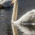 Swan by David Bearden