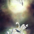 Swan Dreams by Carol Cavalaris