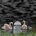 Swan Family by Terri Mills