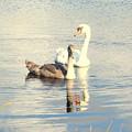 Swan G by Hilde Widerberg