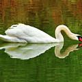 Swan Heart by Jerry Cowart