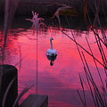Swan In A Sunset by Jack Riordan
