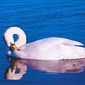 Swan by John Hughes