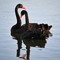 Swan Lake 5 by Anthony Croke