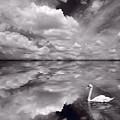 Swan Lake Explorations B W by Steve Gadomski