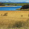Swan Lake by Jennifer Robin