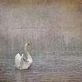 Swan Lake by Liz Alderdice