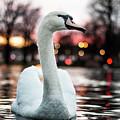 Swan Lake Night 2 by Steven Jones