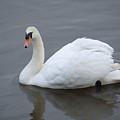 Swan Lake by Paul Boast
