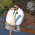 Swan by Lucrecia Cuervo