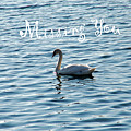 Swan Miss You by Aimee L Maher ALM GALLERY