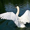 Swan Moment by John Waclo