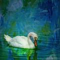 Swan On A Blue And Green Lake by Mitch Spence
