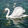 Swan On Lake Geneva Switzerland  by Carol Japp