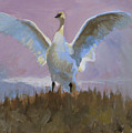 Swan by Robert Bissett