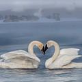 Swan Valentine - Blue by Patti Deters