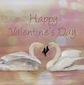 Swan Valentine by Patti Deters
