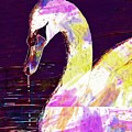 Swan White Water Bird White Swan  by PixBreak Art