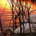 Swans 1 by Jeff Heimlich