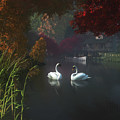 Swans In A River Near Home by Jan Keteleer