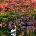 Swans In The Boston Public Garden by Joann Vitali