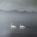 Swans On Misty Pond by Dennis Kirby