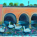 Swans On The Charles River by Rita Brown