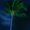 Swaying Palm Tree by Roger Mullenhour