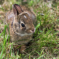 Sweet Baby Bunny by Terry DeLuco