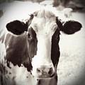 Sweet Cow Face by Carol Groenen