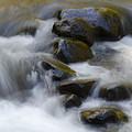 Sweet Creek Oregon 14 by Bob Christopher