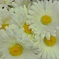 Sweet Daisy Faces by Florene Welebny