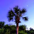 Sweet Dreams Carolinas by Sherry Kuhlkin