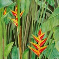Sweet Heliconias by Anji Worton